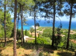 corsica trees