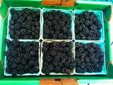 Top Travel Tip: Fruit picking on Sauvie Island,Portland