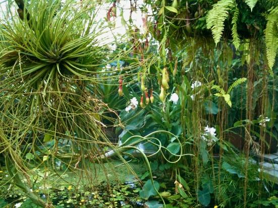 gorgeous plants sf
